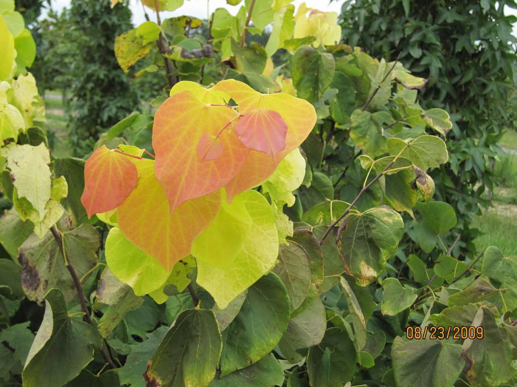 Plant Details A A Garden